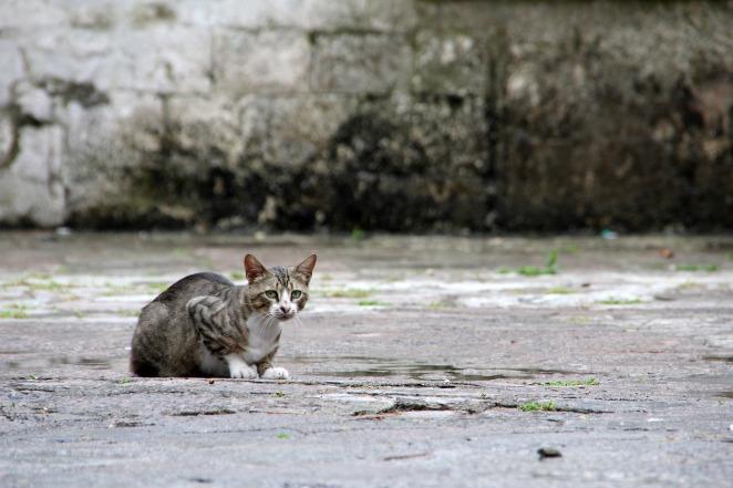 Gato Abandono