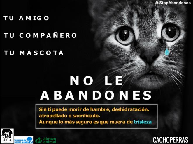 TRISTEZA - NO LE ABANDONES- Campaña contra abandono animal. Gato