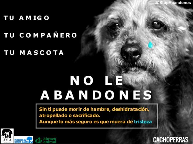 TRISTEZA - NO LE ABANDONES- Campaña contra abandono animal Perro
